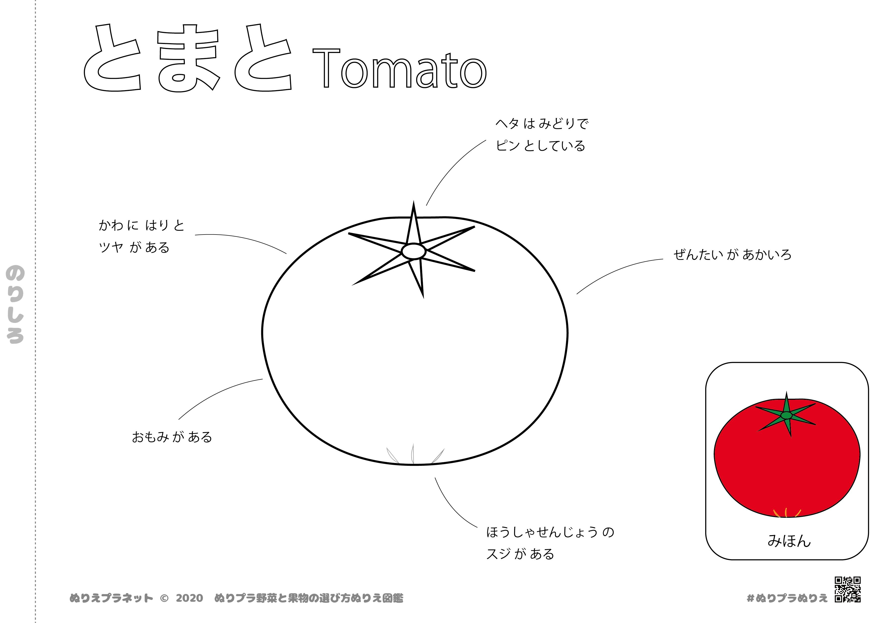 野菜と果物の選び方ぬりえ図鑑シリーズのやさい、トマトです。